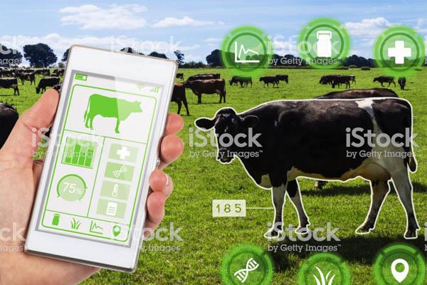 ứng dụng của iot trong chăn nuôi